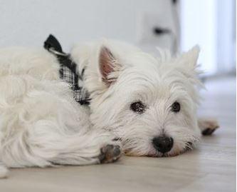 Bild für Kategorie Hund & Katze