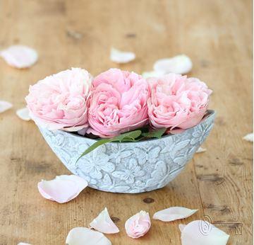 Bild von Vasenschiffchen Butterfly